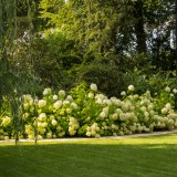 Hortensiengruppe