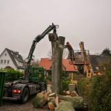 Großbaumfällung