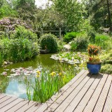 Naturgartenteich
